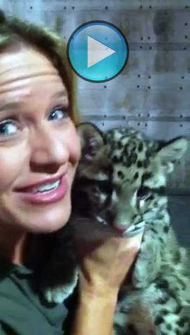 Kangaroo Lanie and Clouded Leopard